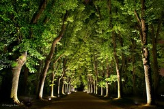 Talking to My Own Steps (sergionreis) Tags: portugal oporto tree nature pathway garden night serralves parquedeserralves