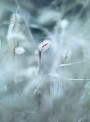 Ordinary scene (Tomo M) Tags: salixgracilistyla weed winter bokeh blur abstract ネコヤナギ nature helios park macro plant