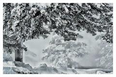 * (PattyK.) Tags: january winter snow 2019 nikond3100 snapseed grevena vasilitsa greece grecia griechenland mountain βασιλίτσα γρεβενά χειμώνασ ιανουάριοσ χιόνι βουνό ελλάδα μακεδονία macedonia δέντρα χιονοδρομικόκέντρο skiresort