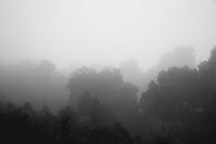 -Boira a l'Extremera. (ec.thor) Tags: boira niebla fog canon eos80d 80d nautre rainy mountain mono monochrome black white blackandwhite