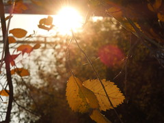sun (cloversun19) Tags: rain animal field grass landscape branches leafs foliage sky russia russian spb tree walking country holiday holidays park garden dream dreams positive forest happy view grey legend fairytale fir firtree birch village evening romantic october september car road street blue maple leaves town city light sun yellow autumn trees