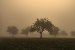 Fog has been rolling in. (pwendeler) Tags: fog mist nebel sonyalphaa6500 sony landscape landschaft landscapephotography landschaftsfotografie tree hohestrase viaregia hoheloh hessen hesse germany field feld