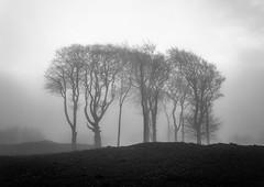 Minning Low Trees (l4ts) Tags: landscape derbyshire peakdistrict whitepeak minninglowhill minninglow roundcairn trees mist bronzeage blackwhite monochrome