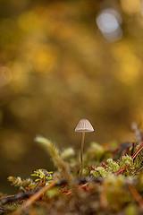 Bokeh Mushroom 2 (Lion.Ram Photography) Tags: mushroom mushrooms mycology fungi funguy bokeh nature moss forest woods fairy pnw pacific northwest washington oregon mt rainier mount mountain hiking adventure forage explore