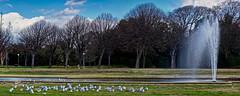 Parc Borely (thierrybalint) Tags: parc borely marseille nikon nikoniste ciel arbres nuages sky clouds trees eau water