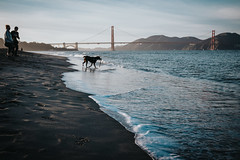 beach combing (gedankenstuecke) Tags: clouds california goldengatebridge crissyfield ocean bayarea seaside sand bay dog sky beach sanfrancisco water boy waves
