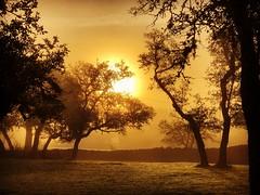Foggy sunrise in the Texas hill country (Cooke Photo) Tags: oaktrees oldrockwall drystackrockwall serene sun fog trees sunrise