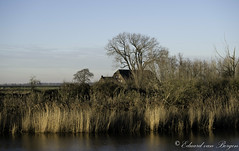 Hidden . . (Eduard van Bergen) Tags: dijk dike field tele river rivier nieuwe merwede meadow water bank working holland nederland netherlands bas pays dutch building polder land grass bush outdoor biesbosch landscape plain trees house old vintage ancient haus sky serene art remote farm farmer family cattle horizon hetkooike steurgat bruinekil noordwaard hidden ruff fujifilmxe1 xc50230oisii noord bushes kreupelhout reed riet werkendam dordrecht tkooike brabantsebiesbosch brabant living life cottage mansion lodge rural estate real roof property landhuis farmhouse barn shed rijshout