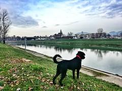 _Ci voleva lei_ (_Donna L_) Tags: firenze arno fiume passeggiata dog cane frida bellezza natura