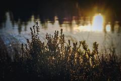 Pond sunset (Klas-Herman Lundgren) Tags: dalarna sweden gimmen autumn höst forest trees skog october red leaves colors ground skogsmark tjärn porstjärn pond myrmark sunset sun light solnedgång water vatten sjö lake sifferbo se