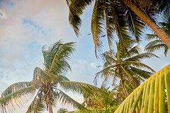 Vultures glide over the Palms (John Andersen (JPAndersen images)) Tags: beach clouds jungle mayanriviera mexico palms sand sunrise vultures waves