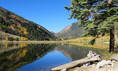 Autumn Reflections (Patricia Henschen) Tags: buenavista colorado cottonwood lake sanisabelnationalforest mountain forest reflection fall fallcolor leafpeeping aspen backroads backroad chaffeecounty nationalforest sanisabel reflections