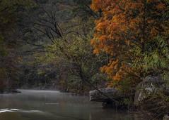 Peak (keith_shuley) Tags: bullcreek stream fall orange austin texas texashillcountry