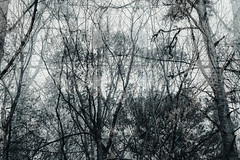 (heremptynest) Tags: forest doubleexposure blackandwhite bw nature moody canon northamerica northgeorgia monochrome november winter landscape
