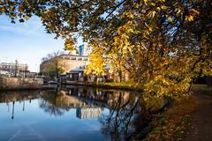 Framed (Maria Eklind) Tags: garden autumn tree gothenburg göteborg trädgårdsföreningen spegling sweden reflection flower frame höst city västragötalandslän sverige se