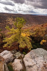 MCZ_2239 (markczerner) Tags: landscape outdoors fall colors fallcolors autumn orange red trees nature river coopers rock coopersrock statepark park west virginia wv wva countryroads country roads cheatriver valley mountains forest