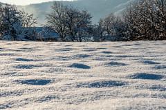 DSC_ (Anes Trebinjac) Tags: nikon d7500 18140 anes trebinjac bosna hercegovina sarajevo ilijaš landscape sun shine sunce sija tree drvo snijeg snow