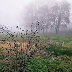 Inverno polesano (alex.gb) Tags: adria fog nebbia prato grass tree cespuglio bush invernopolesano polesine winter cold ice galaverna frost