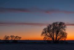 sky lines (Karl-Heinz Bitter) Tags: abendhimmel abendrot bäume deutschland europa hessen jahreszeiten lichtstimmung oberelsungen sonnenuntergang winter germany plants sundowner trees lines sky