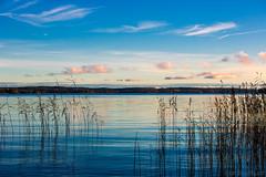 November blues (Joni Mansikka) Tags: autumn nature outdoor sea seabay blues sky clouds reeds trees silhouettes calm balticsea harvaluoto piikkiö suomi finland landscape