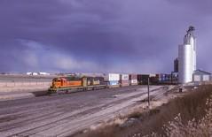 BNSF    Cut Bank, MT (larryzeutschel) Tags: bnsf railroad montana
