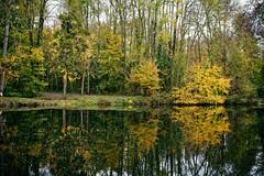 chezelle (cenon sur vienne) (ludovicthiaudiere) Tags: reflet konicahexanon40mmf18 leclain nouvelleaquitaine reflections nature sonyilce7m3