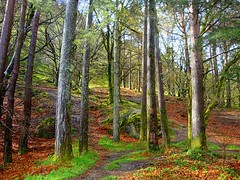in fairytale forest (majka44) Tags: ireland glendalough green travel light color nice atmosphere spring