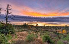 Sunrise Timelapse (nicklucas2) Tags: time timelapse photoshop stack landscape tree