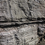 Limestone (Mill Knob Member, Slade Formation, Upper Mississippian; Clack Mountain Road Outcrop, south of Morehead, Kentucky, USA) 8 thumbnail