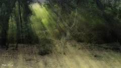 Haces de luz (pedroramfra91) Tags: otoño autumn bosque wood naturaleza nature arboles trees exteriores outdoors