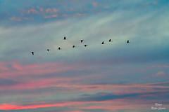 Atardecer con Grullas (Peideluo) Tags: naturaleza cielos nature sky paisajes aves clouds grullas birds cielo
