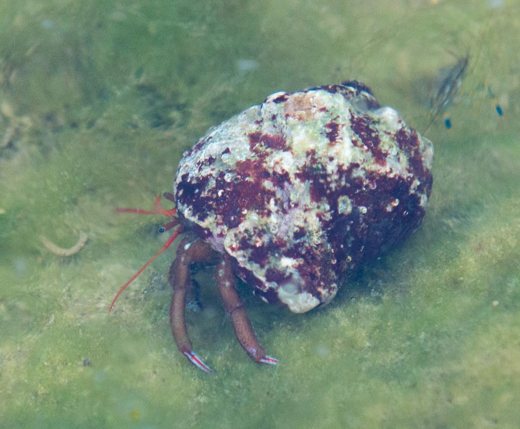 фото: Sea life