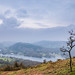 Lone Tree at Windemere