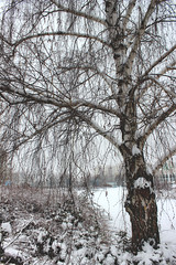 A nice winter day / EXPLORE!! (Ibolya Mester) Tags: