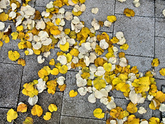 Paved with gold...