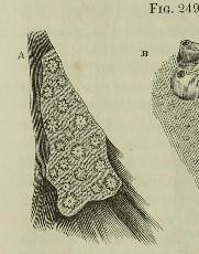 This image is taken from Page 502 of The microscope: and its revelations (Medical Heritage Library, Inc.) Tags: microscopy natural history wellcomelibrary ukmhl medicalheritagelibrary europeanlibraries date1856 idb28136974