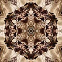 Kaleido Abstract 1896 (Lostash) Tags: art abstract edited nature patterns symmetry kaleidoscopes