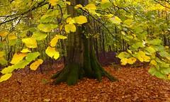 Autumn (catha.li) Tags: lgg4 sweden forestimages woodland autumncolors naturewatcher soe