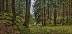 Waldwege (Robbi Metz) Tags: deutschland germany landscape forest trees nature hiking colors canoneos