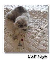 Cat Toys (myphotomailbox) Tags: rotterdam netherlands strevelsweg indoor cat animal