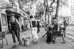 Dog care (un2112) Tags: budapest dog kutya streetphoto g80 august oldman homeless blackandwhite monochrome bw humansofbudapest