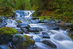 Sweet Creek Falls 1905 A (jim.choate59) Tags: jchoate on1pics waterfall sweetcreek oregon landscape forest florenceoregon moss peaceful water trees