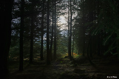 Through the trees (Lee1885) Tags: tree light dark sun colour nature wales moelfamau