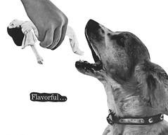 Flavorful (dadadreams (Michelle)) Tags: collage art dog flavorful creepy weird strange