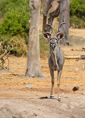 _DSC9046 (acomb) Tags: tanzania roadtrip ruaha tandala