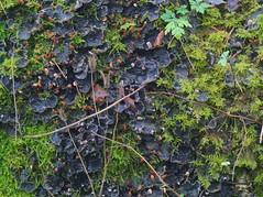 PC020179 (Asansvarld) Tags: mossa moss lav svamp winter vinter december microfourthirds olympusomdem5 om50mmf18 manuallens manuelltfoto manualphoto manuelltobjektiv östergötland