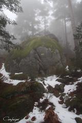 La magia de la naturaleza...30/365 (cienfuegos84) Tags: cienfuegos84 cercedilla nieve snow nature naturaleza arbol arboles tree trees