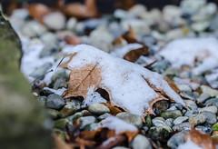 2-5-19................ (Omygodtom) Tags: d7000 snow febuary tamron90mm tamron macro bokeh dof white rock scene setting season usgs