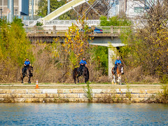 Mounted Police (deepaqua) Tags: trafficcone autumn police texas bridge austin tree coloradoriver horse embankment