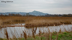 Glastonbury Tor from RSPB Ham Wall on a grey Boxing Day (DougRobertson) Tags: rspb hamwall glastonburytor wildlife scenery somerset water wetlands somersetlevels
